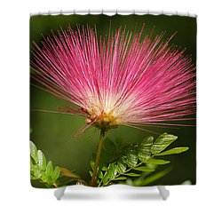 Delicate Pink Bloom Shower Curtain by Gary Crockett