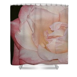 Shower Curtain featuring the painting Delicate Pink Rose by Debra Crank