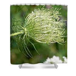 Shower Curtain featuring the photograph Delicate Plant by Betty-Anne McDonald
