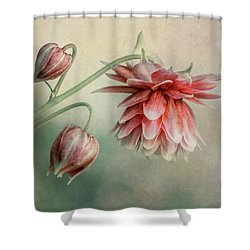 Delicate Red Columbine Shower Curtain