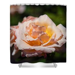 Delicate Rose Shower Curtain