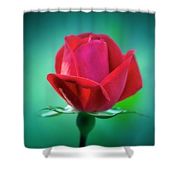 Delicate Rose Petals Shower Curtain