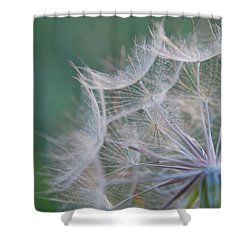 Delicate Seeds Shower Curtain