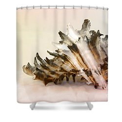 Delicate Shell Shower Curtain