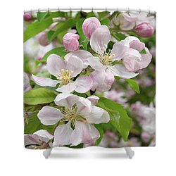 Delicate Soft Pink Apple Blossom Shower Curtain by Gill Billington