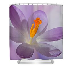 Delicate Spring Crocus. Shower Curtain