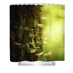 Delicate Touches Shower Curtain