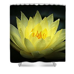 Delicate Water Lily Shower Curtain