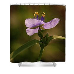 Delicate Wildflower Shower Curtain by Carolyn Dalessandro