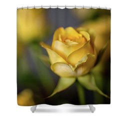 Delicate Yellow Rose  Shower Curtain by Terry DeLuco