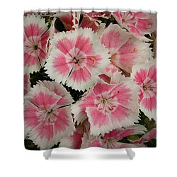 Shower Curtain featuring the photograph Delightful Dianthus by Jean Noren