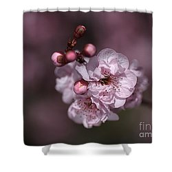 Delightful Pink Prunus Flowers Shower Curtain by Joy Watson
