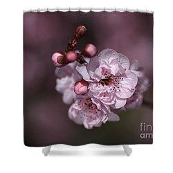 Delightful Pink Prunus Flowers Shower Curtain