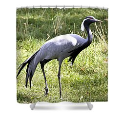 Shower Curtain featuring the photograph Demoiselle Crane by Teresa Zieba
