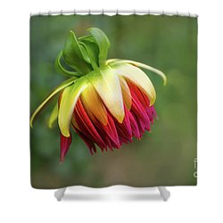 Demure Dahlia Bud Shower Curtain
