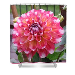 Denali Dahlia Shower Curtain