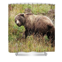 Denali Grizzly Shower Curtain