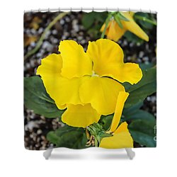 Desert Beauty Shower Curtain by Roberta Byram