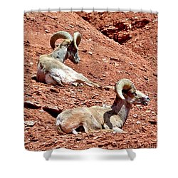 Desert Big Horn Sheep Capitol Reef National Park Utah Shower Curtain