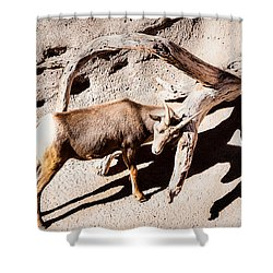 Shower Curtain featuring the photograph Desert Bighorn Ram by Lawrence Burry