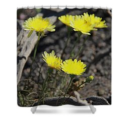 Shower Curtain featuring the photograph Desert Dandelion by Suzanne Oesterling