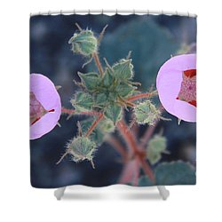 Shower Curtain featuring the photograph Desert Five Spot by Suzanne Oesterling