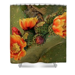 Shower Curtain featuring the photograph Desert Flame by Lucinda Walter