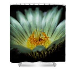 Desert Flower Shower Curtain