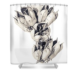 Desert Flower Shower Curtain by Racheal Christian