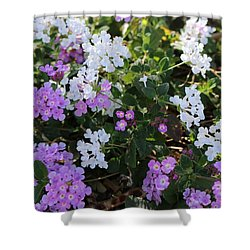 Shower Curtain featuring the photograph Desert Flowers  by Christy Pooschke