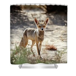 Desert Fox Shower Curtain