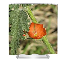 Desert Globemallow Bloom 202 Shower Curtain by En-Chuen Soo