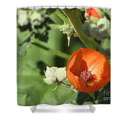 Desert Globemallow Bloom 215 Shower Curtain by En-Chuen Soo