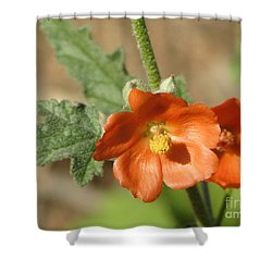 Desert Globemallow Bloom 220 Shower Curtain by En-Chuen Soo