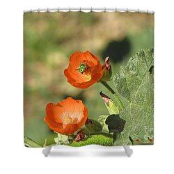 Desert Globemallow Blooms 227 Shower Curtain by En-Chuen Soo