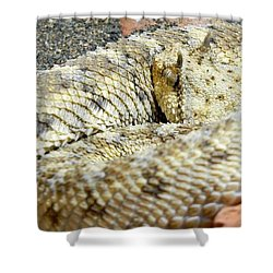 Desert Horned Viper Shower Curtain