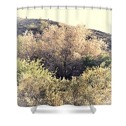Desert Ironwood Afternoon Shower Curtain