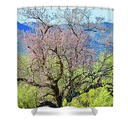 Desert Ironwood Beauty Shower Curtain