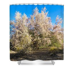 Desert Ironwood Tree In Bloom - Early Morning Shower Curtain