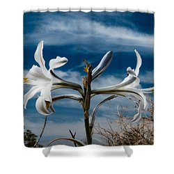 Shower Curtain featuring the photograph Desert Lilly Close Up by Jeremy McKay