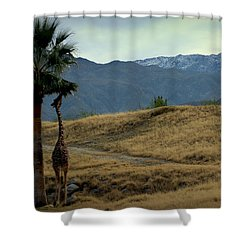 Desert Palm Giraffe 001 Shower Curtain