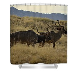Desert Palm Landscape Shower Curtain