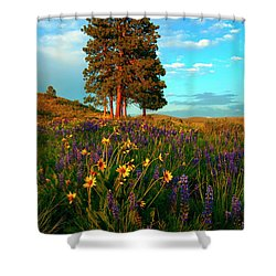 Desert Pines Meadow Shower Curtain by Mike  Dawson