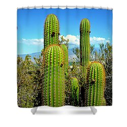 Shower Curtain featuring the photograph Desert Plants - All In The Family by Glenn McCarthy