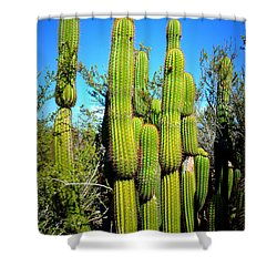 Shower Curtain featuring the photograph Desert Plants - Standing Tall by Glenn McCarthy