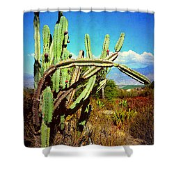 Shower Curtain featuring the photograph Desert Plants - Westward Ho by Glenn McCarthy