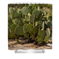 Shower Curtain featuring the photograph Desert Prickly-pear No6 by Mark Myhaver