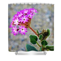 Desert Sand Verbena Shower Curtain by Michele Penner