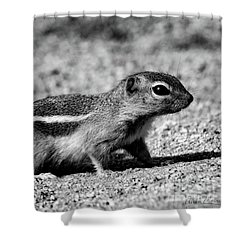 Scavenger, Black And White Shower Curtain