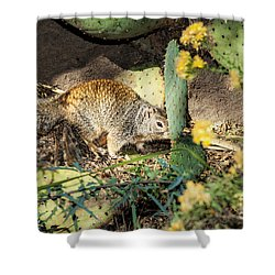 Desert Squirrel Shower Curtain